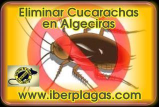 Eliminar Cucarachas en Algeciras