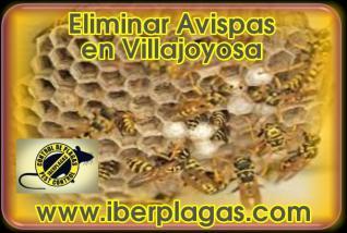 Eliminar Avispas en Villajoyosa