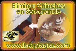 Eliminar Chinches en Sotogrande