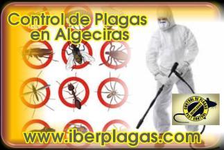 Control de Plagas en Algeciras