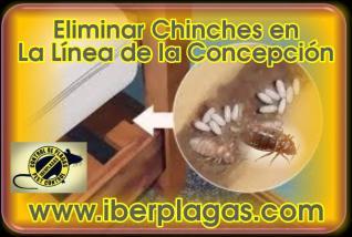 Eliminar Chinches en La Línea de la Concepción