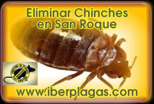 Eliminar Chinches en San Roque