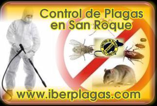 Control de Plagas en San Roque