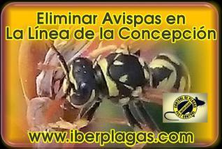 Eliminar Avispas en La Línea de la Concepción