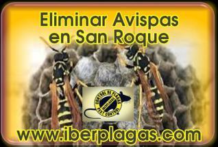 Eliminar Avispas en San Roque
