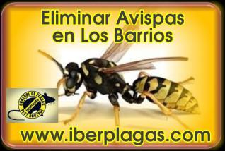 Eliminar Avispas en Los Barrios