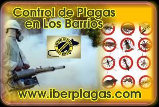 Control de Plagas en Los Barrios