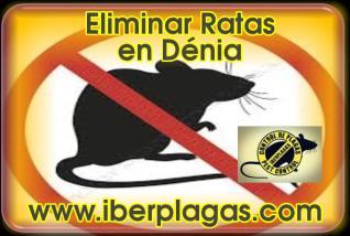 Eliminar Ratas en Dénia