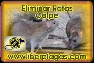 Eliminar Ratas en Calpe