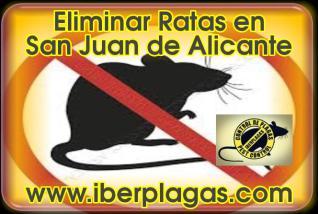 Eliminar Ratas en San Juan de Alicante