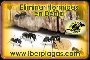 Eliminar hormigas en Dénia