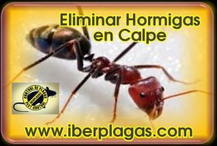Eliminar Hormigas en Calpe