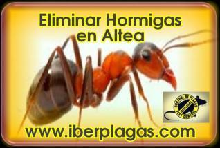 Eliminar Hormigas en Altea