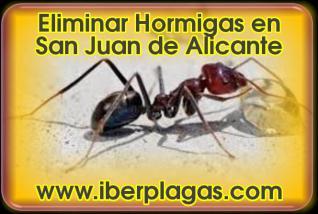 Eliminar Hormigas en San Juan de Alicante