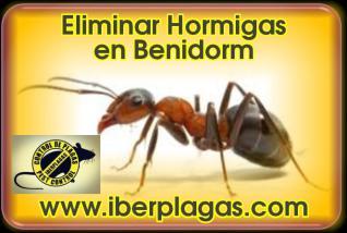 Eliminar Hormigas en Benidorm