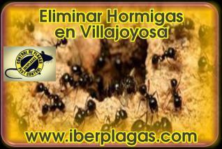 Eliminar Hormigas en Villajoyosa