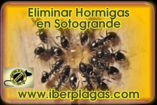 Eliminar Hormigas en Sotogrande
