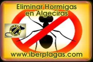 Eliminar Hormigas en Algeciras