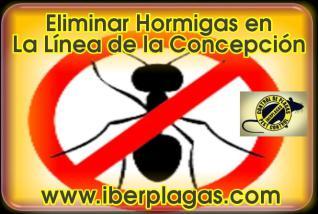 Eliminar Hormigas en La Línea de la Concepción