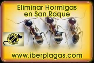 Eliminar Hormigas en San Roque