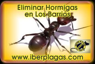 Eliminar Hormigas en Los Barrios