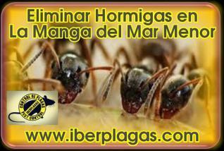 Eliminar Hormigas en La Manga del Mar Menor