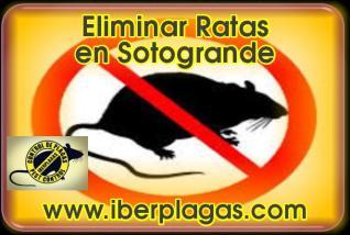 Eliminar Ratas en Sotogrande