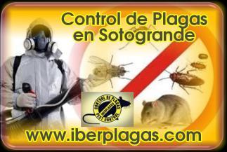 Control de Plagas en Sotogrande