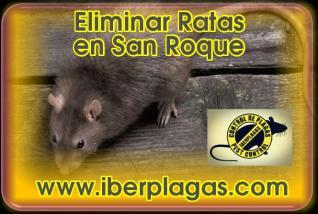 Eliminar Ratas en San Roque