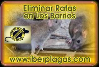 Eliminar Ratas en Los Barrios