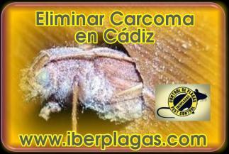 Eliminar Carcoma en Cádiz
