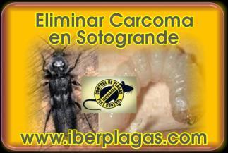 Eliminar Carcoma en Sotogrande