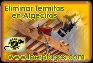 Eliminar Termitas en Algeciras