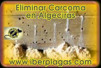 Eliminar Carcoma en Algeciras