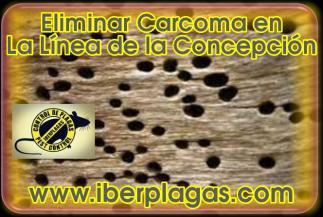 Eliminar Carcoma en La Linea de la Concepción