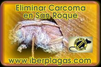 Eliminar Carcoma en San Roque