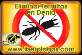 Eliminar Termitas en Dénia