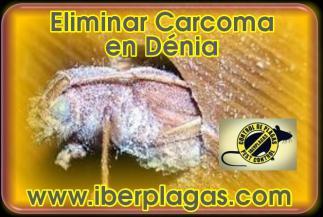 Eliminar Carcoma en Dénia
