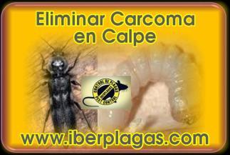 Eliminar Carcoma en Calpe