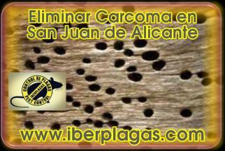 Control de Plagas en San Juan de Alicante