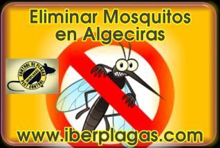 Eliminar Mosquitos en Algeciras