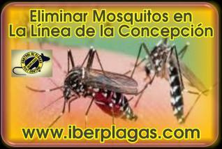 Eliminar Mosquitos en La Línea de la Concepción