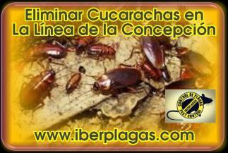 Eliminar Cucarachas en La Línea de la Concepción