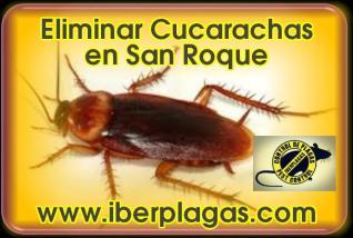 Eliminar Cucarachas en San Roque