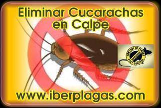 Eliminar Cucarachas en Calpe