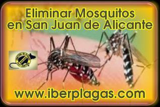 Eliminar Mosquitos en San Juan de Alicante