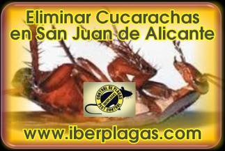 Eliminar Cucarachas en San Juan de Alicante