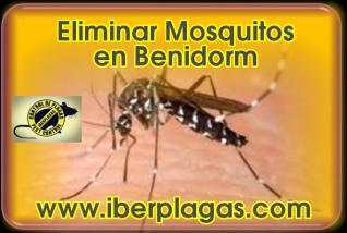 Eliminar mosquitos en Benidorm