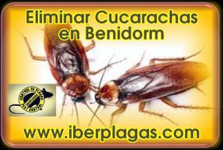 Eliminar cucarachas en Benidorm