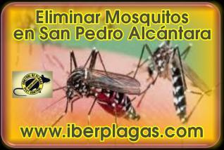 Eliminar Mosquitos en San Pedro Alcántara